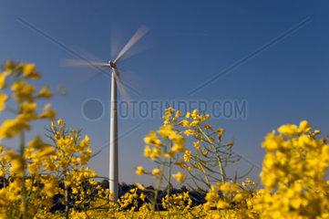 sich drehendes Windrad hinter einem gelben Rapsfeld