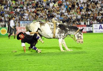 Jesus Maria  Argentinien  Reiter faellt von seinem buckelnden Pferd