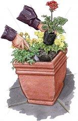 Kuebel mit Sommerblumen bepflanzen