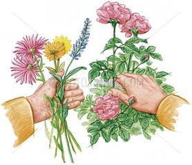 Blumenstrauss zusammenstellen
