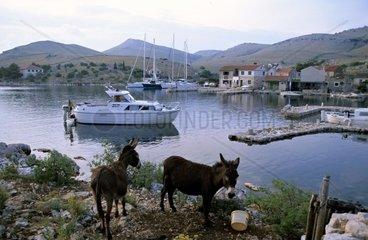 Kroatien  Kornaten  Insel Kornat  Vrulje