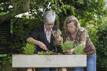 Gaertnerinnen beim Bepflanzen eines Blumenkastens