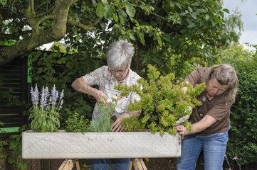2 Frauen bepflanzen einen Blumenkasten fuer den Balkon