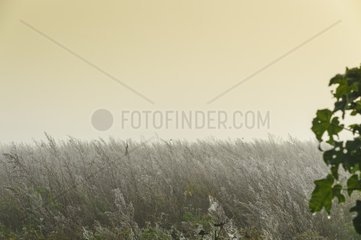 Morning fog over a fallow field in autumn