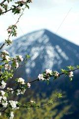 Fruehling Bayern Alpen Eschenlohe