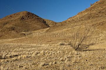 Wilde wss stenartige Landschaft im Richtersveld  Ai-Ais Richtersveld Transfrontier Park  Provinz Nordkap  Sss dafrika
