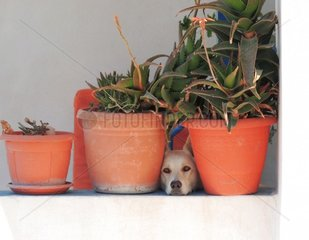 Hund Versteck Suchbild