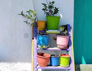 Dekorativer Blumenstaender Griechenland