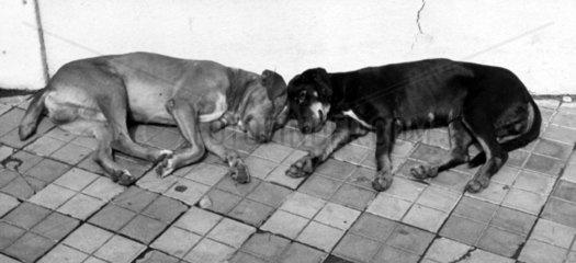 Zwei Hunde schlafend