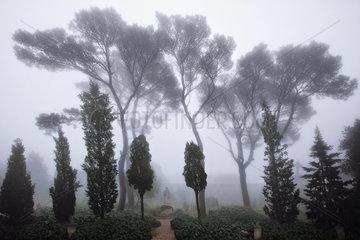 Klostergarten Randa de Cura  Mallorca  Spain
