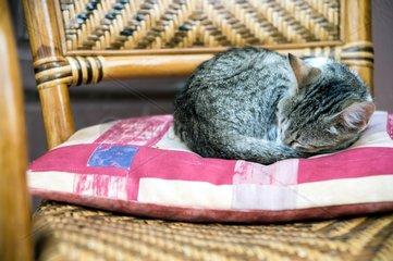 Katze schlaeft