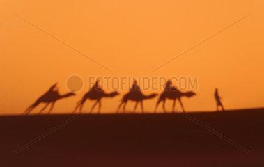 Schatten einer Karawane in der Wueste