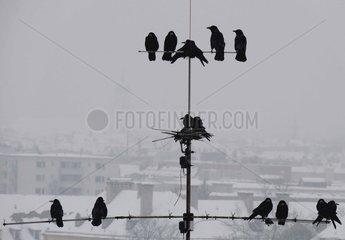 Kraehen Antenne Schneefall