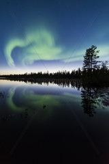 Nordlicht (Auroa borealis) spiegelt sich in einem Waldsee  Lappland