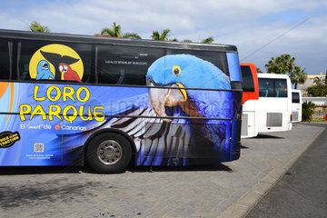 Reisebus des Loro Park  Teneriffa  Kanarische Inseln  Spanien
