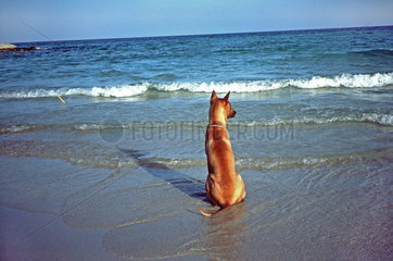 Hund sitzt am Strand