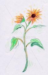 Sonnenblume mit 2 Blueten