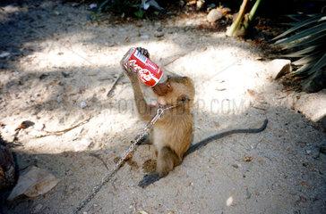 Aeffchen trinkt Coca Cola