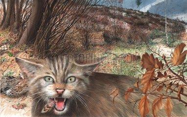 Serie Lebensraum Niederwald