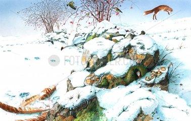 Serie Lebensraum Steinhaufen