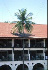 Palme waechst durch Dach