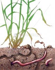 Lebensraum Regenwurm Blockbild