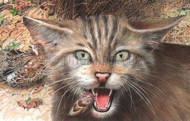 Serie Lebensraum Niederwald Detail mit Wildkatze