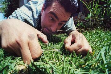 Nagelschere Gras Pedant