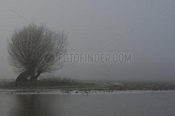 alte Kopfweiden... Bislicher Insel *Nordrhein-Westfalen*