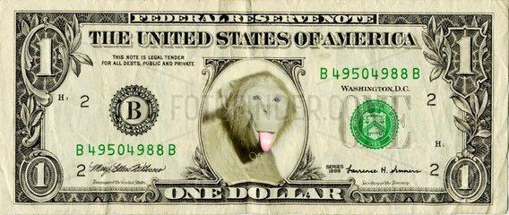 Dollar Geldschein Waehrung Affe