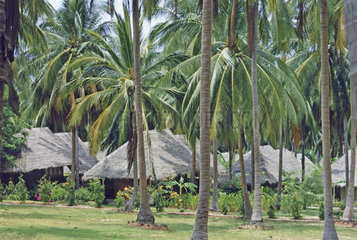 hotel between palm trees