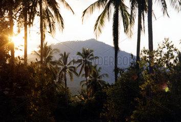 Thailand  Koh Samui  Landschaft in den Bergen