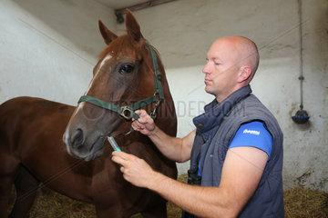 Muenchen  Deutschland  Rennpferdetrainer Michael Figge verabreicht einem Pferd ein homoeopathisches Mittel