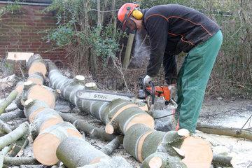Hamm  Deutschland  Baumpfleger zersaegt einen Baum