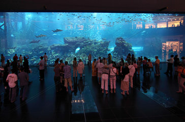 Dubai  Vereinigte Arabische Emirate  Besucher vor dem Dubai Aquarium der Mall of Dubai