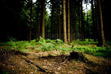 Goslar  Deutschland  Waldboden