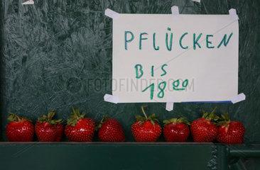 Werl  Deutschland  Hinweis zur Oeffnungszeit an einem Erdbeerfeld