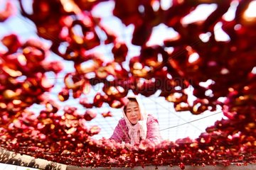 #CHINA-SHANDONG-HAWTHORN INDUSTRY (CN)