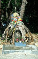 Thailand  Koh Samet Bodibaum  Buddhismus
