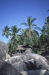 rocks palm trees hut