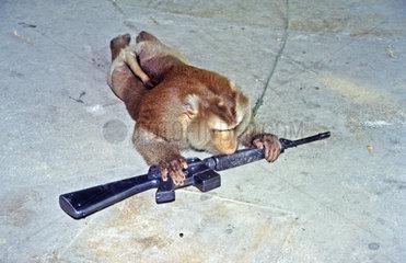 Pavian mit Gewehr