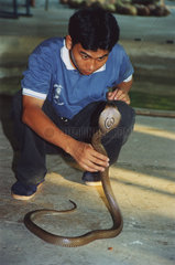 Thailand Kobra