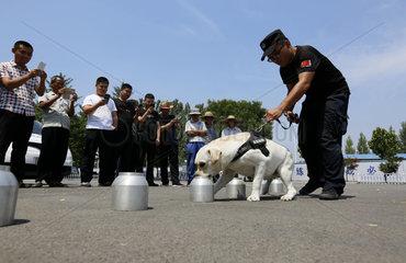 #CHINA-SHANDONG-LINYI-SNIFFER DOG-SHOW (CN)