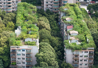 Chengdu - Buildings and vegetation
