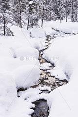 Bachlauf im Wald  Korouoma Naturreservat  Finnland