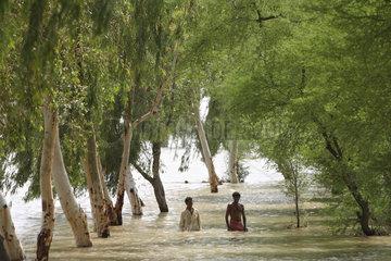Dadu  Pakistan  ueberschwemmte Baumallee
