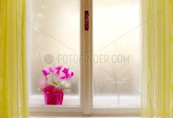 Blumen im Fenster