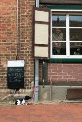 Plau am See  Deutschland  ein angebundener Hund vor einer Gaststaette