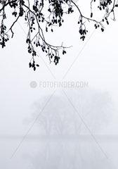 Schwarz-Erle mit Nebel_01.tif
