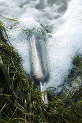 Hiddensee  Deutschland  eine Flaschenpost am Strand